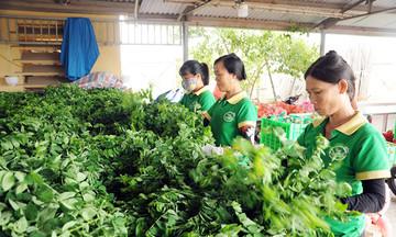 Dấu ấn HTX với nông thôn mới nâng cao ở Yên Lạc