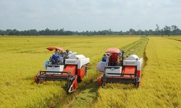 Giá lúa Hè Thu giảm sâu, Bộ NN&PTNT đề xuất Chính phủ thu mua tạm trữ