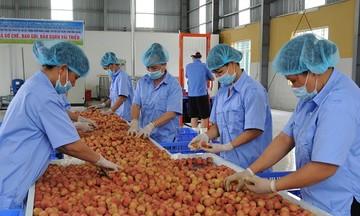 Ngành nông nghiệp xuất siêu 3,9 tỷ USD trong 7 tháng 2021