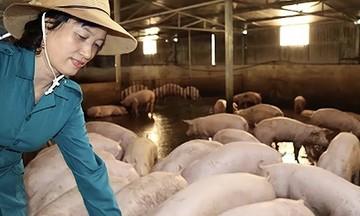 HTX Minh Thuận: Rộng đầu ra nhờ nuôi lợn an toàn khép kín