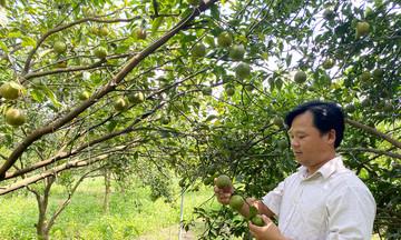 HTX Dân Tiến: 'Bà đỡ' phát triển nông nghiệp bền vững