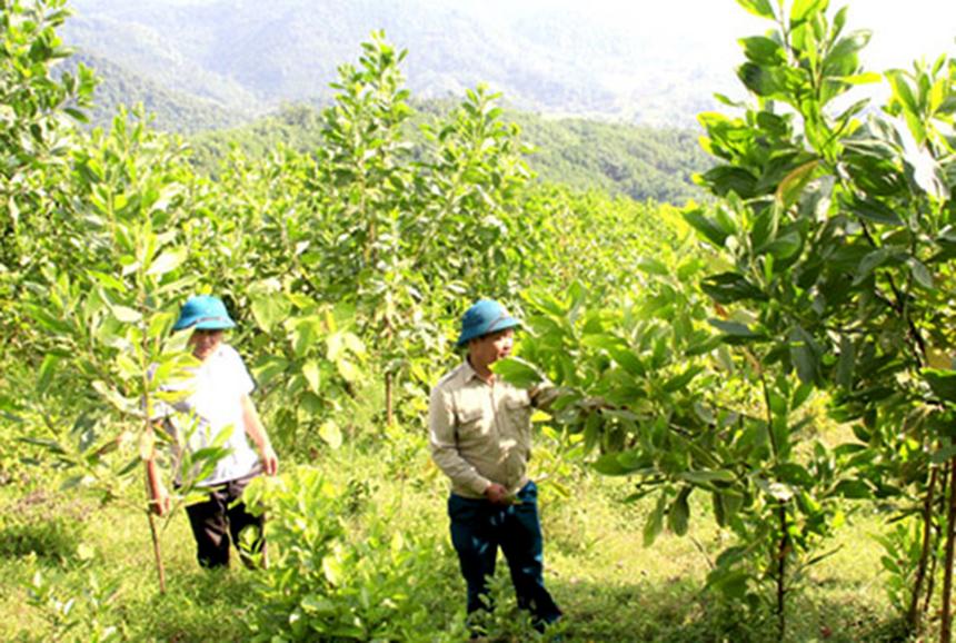 Vi-Xuyen-2b-8330-1629092277.jpg