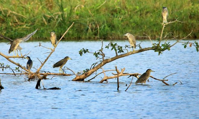 <p> Ngoài thiên nga, nhiều loại chim cũng đến đây làm tổ, tạo thành hệ sinh thái đa dạng. Dạo một vòng quanh các công viên, hồ nước, người dân có thể nghe tiếng chim hót, ngắm nhìn chúng bay nhảy giữa những tán cây xanh.</p>