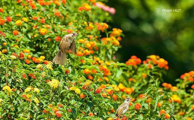 """<p class=""""Normal""""> Những chú chim cũng về làm tổ bên những khóm hoa rực rỡ sắc màu.</p>"""