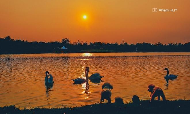 """<p class=""""Normal""""> Ban quản lý khu đô thị cho biết, những loài chim, động vật đến đây sinh sống do có môi trường sống gần với tự nhiên. Ngoài hàng triệu cây xanh cùng diện tích hồ nước hơn 50ha, khu đô thị cũng chú trọng tạo môi trường tốt để thu hút các loài chim tự nhiên đến sinh sống.</p>"""