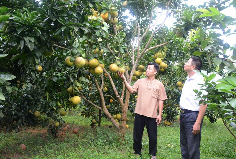 guoi-dan-xa-Vinh-Quang-Chiem-H-6987-9968