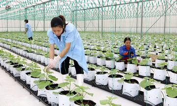 Chuyện xây dựng nông thôn mới kiểu mẫu ở Hà Nam