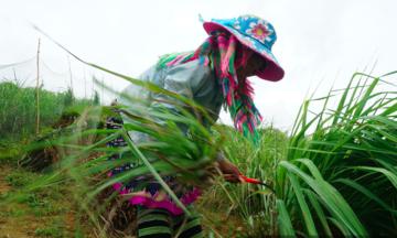 Diện mạo mới ở huyện vùng cao Trạm Tấu (Bài 1): Đồng bào dân tộc thiểu số vững tin phát triển sản phẩm thế mạnh