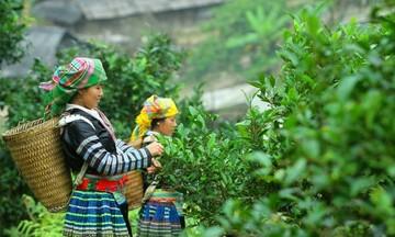 Huyện nghèo Xín Mần khởi sắc nhờ xây dựng nông thôn mới