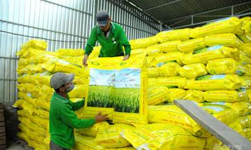 Vụ lúa Đông Xuân ở Đồng bằng Sông Cửu Long còn thiếu 50-70 nghìn tấn giống