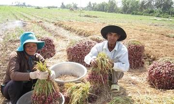 Đồng bào dân tộc thiểu số ở Sóc Trăng làm kinh tế nông nghiệp (Bài 1): Giải 'bài toán' thiếu đất sản xuất