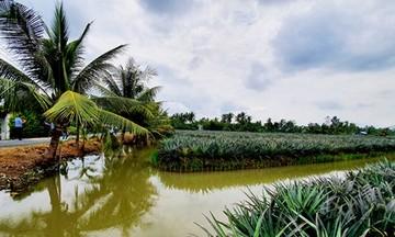 Phát triển các mô hình sản xuất nông nghiệp sạch ở huyện Gò Quao (Bài 2): Đa dạng hóa các mô hình sản xuất