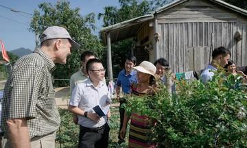 Hướng đi mới của người Cơ Tu ở Quảng Nam (Bài 2): Làm nông nghiệp hàng hóa với chè dây Ra Zéh