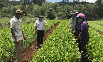 Hướng đi mới cho người Cơ Tu ở Quảng Nam (Bài 1): Bước ngoặt trong nỗ lực giảm nghèo