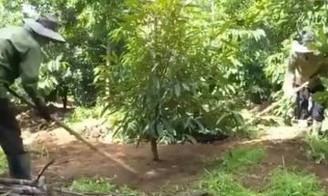 Đồng bào DTTS Kon Tum phát triển cây mắc ca hiệu quả và bền vững (Bài 2): Mở hướng thoát nghèo, vươn lên làm giàu