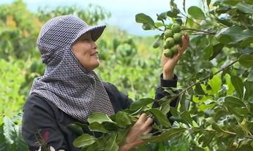 Đồng bào DTTS Kon Tum phát triển cây mắc ca hiệu quả và bền vững (Bài 1): Hướng đến cây trồng chủ lực