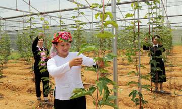 Hiệu quả từ chính sách giảm nghèo ở Bảo Yên (Bài 1): 'Đánh thức' tiềm năng đất đai