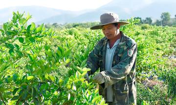 Nông nghiệp Hà Tam khởi sắc với những cây trồng mới