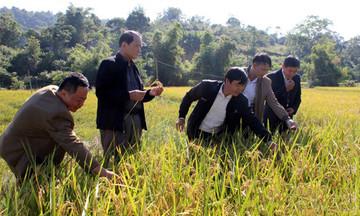 'Nâng chất' cán bộ quản lý HTX vùng dân tộc thiểu số tỉnh Lạng Sơn (Bài 1): Những khó khăn cần tháo gỡ