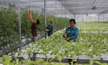 'Nâng chất' cán bộ quản lý HTX vùng dân tộc thiểu số tỉnh Lạng Sơn (Bài cuối): Để HTX phát triển bền vững