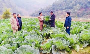 Những vấn đề từ thực tiễn cần sửa đổi Luật Hợp tác xã năm 2012