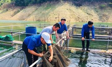 Giám đốc HTX thành công nhờ nuôi cá lồng trên sông Đà