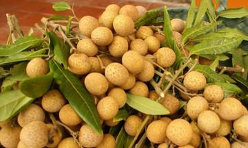 Dịch COVID-19 ảnh hưởng nặng nề tới xuất khẩu rau quả