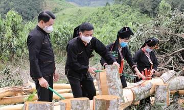 Phát triển cây quế theo hướng hữu cơ ở Văn Yên
