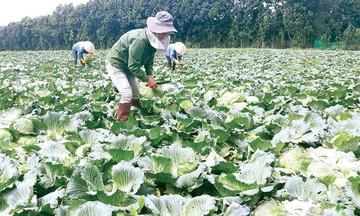 Hướng mở từ chuỗi giá trị rau xanh ở Đắk Song