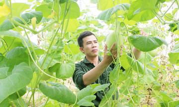 Những người trẻ khởi nghiệp với mô hình HTX ở Nghệ An