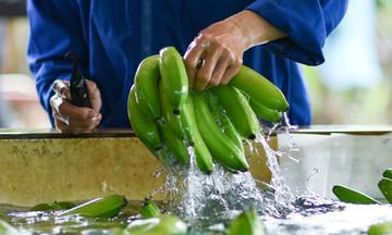 Nông sản Việt không dễ giành thị phần ở thị trường Trung Quốc