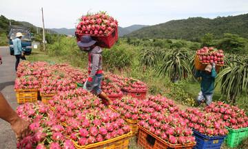 Trung Quốc dừng nhập khẩu thanh long Việt Nam trong 7 ngày tại cầu phao tạm Đông Hưng