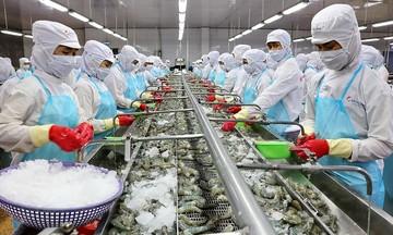 Đơn hàng xuất khẩu dồn dập, doanh nghiệp chế biến tôm lo không đáp ứng đủ