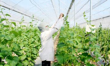 Yên Mô thúc đẩy nông nghiệp hàng hóa bền vững