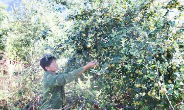 HTX tiên phong trong sản xuất nông nghiệp công nghệ cao ở Bắc Yên