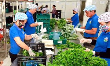 Không để ách tắc trong tiêu thụ nông sản
