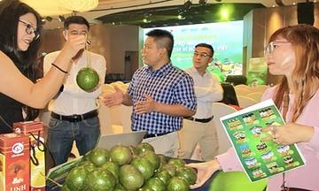 HTX Đắk Lắk: Trồng bơ hữu cơ mở đường bước vào 'sân chơi' cao cấp