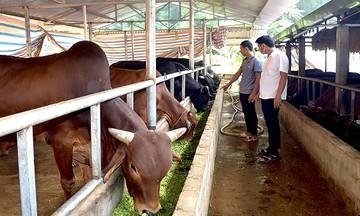 Ngã rẽ bất ngờ của chàng trai cơ điện về thành lập HTX chăn nuôi gia súc