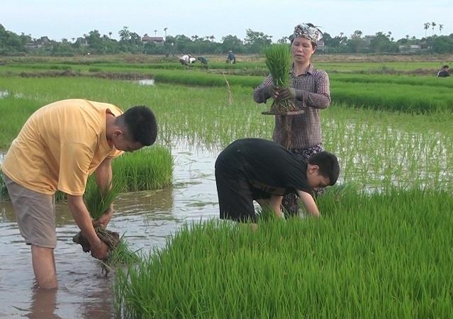 Nong-dan-huyen-Vu-Thu-Thai-Bin-9473-4818