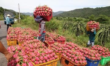 Sắp diễn ra Hội nghị kết nối tiêu thụ, xúc tiến xuất khẩu trái cây của các hợp tác xã