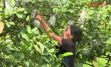 Phát huy vai trò của Đảng viên phát triển trồng cây ăn quả ở Trác Văn