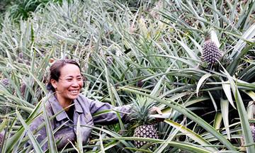 Sản xuất sạch mở đường cho thương hiệu dứa Cayenne Đơn Dương