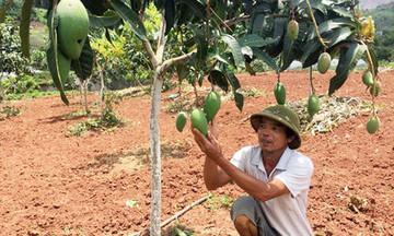 Tân Tiến chuyển đổi cơ cấu nông nghiệp theo hướng bền vững