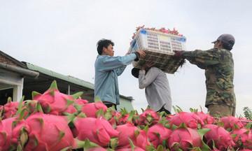 Chủ động tạo thương hiệu cho trái cây của hợp tác xã ở nước ngoài