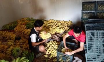 HTX Nam Việt: Sản xuất gắn liền với bảo vệ môi trường