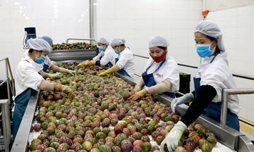 Nghịch lý trái cây dư thừa, doanh nghiệp 'đói' nguyên liệu