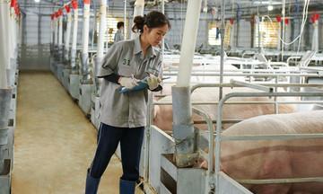 Ngành chăn nuôi làm gì để không phải 'giải cứu'?