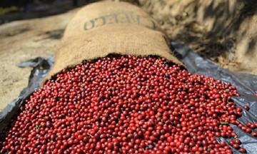 Giá cà phê trong nước đi ngang, thế giới điều chỉnh tăng nhẹ