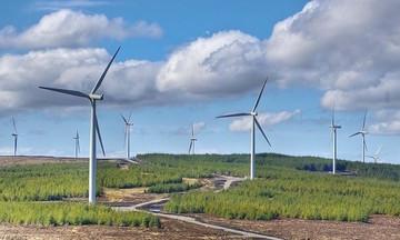 Gần 100 dự án điện gió chạy đua trước 'giờ G' để hưởng giá ưu đãi