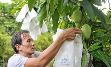 Xuất khẩu nông sản đối mặt 'tin dữ' ở thị trường Trung Quốc